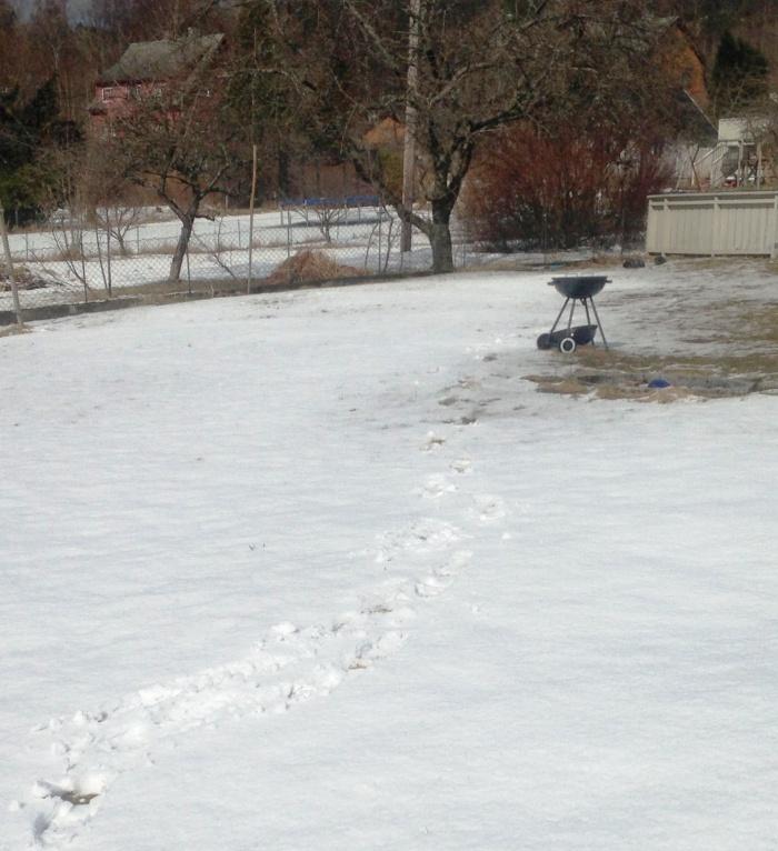 snø i grillen